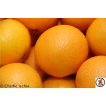 Narancs Navelina bio