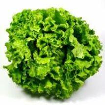 Batávia saláta bio