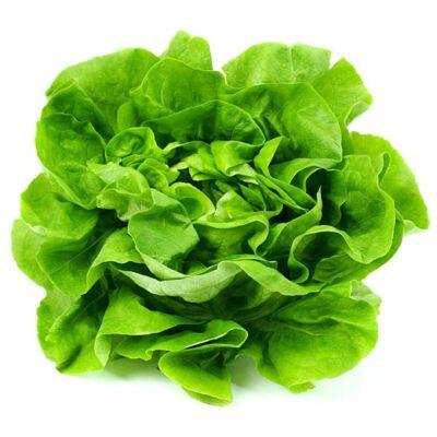 Tölgy levelű saláta BIO (db)